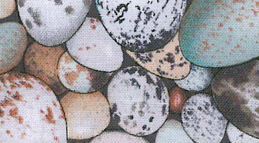 Robin Eggs 567_2